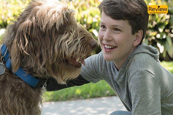 รีวิวหนัง Netflix : Think Like A Dog คู่คิดสี่ขา หนังครอบครัวที่ดูแล้วหัวใจคุณจะนุ่มฟู